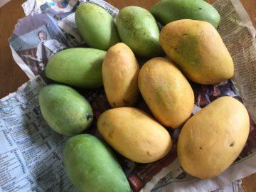 いただきもの Mango~